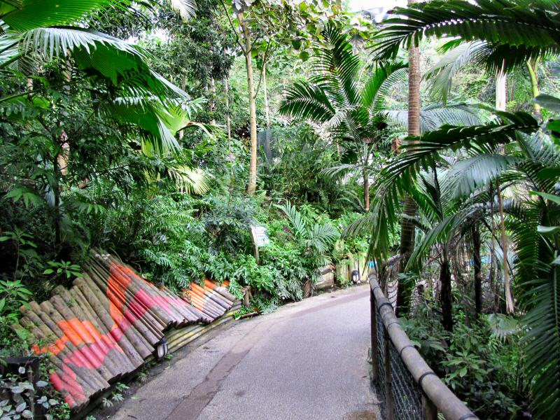 Inside the Rainforest Biome