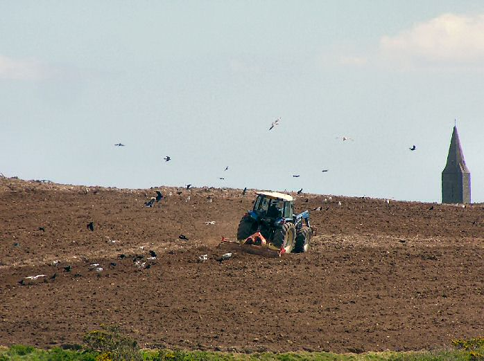 Ploughing the fields - Rame