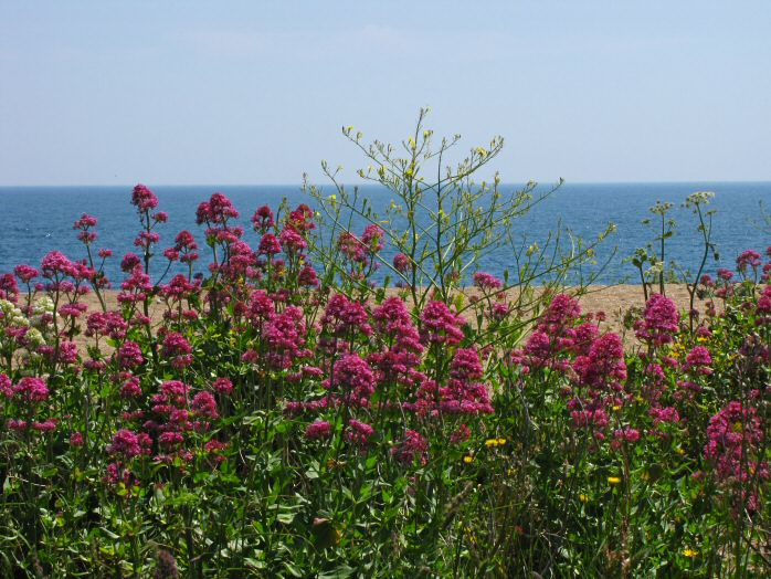 Shingle Beach - Valerian